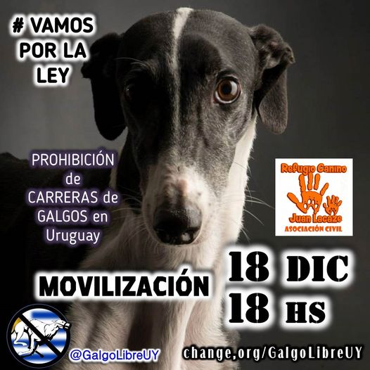 Movilización virtual en contra de las carreras de galgos